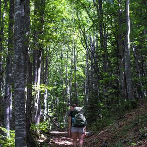 Wanderweg Chamechaude (2082m): Entdecke den höchsten Berg des Chartreuse-Regionalparks in Frankreich
