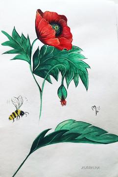 Coquelicot et abeille 2020