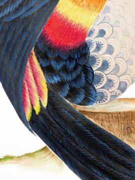 Toucan détail