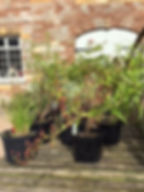 plant sales 1.jpg