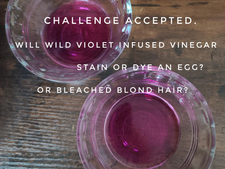 Will Wild Violet Infused Vinegar Stain or Dye an Egg? Bleached Blond Hair? Nerd Challenge Accepted