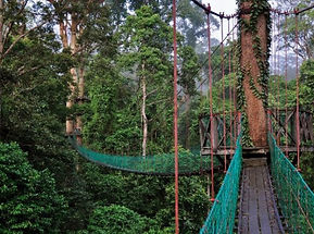danum-valley-canopy-walk_1200.jpg