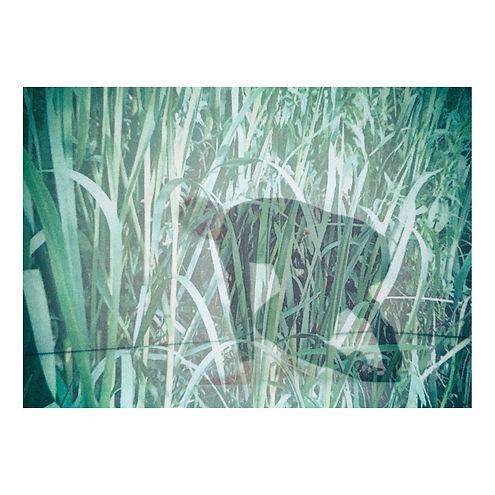 grasswoman2.jpg