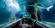 underwater-world-mooloolaba.jpg