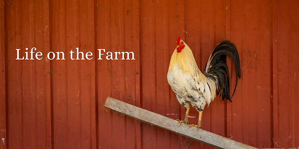 Life on the Farm Banner for Website.png