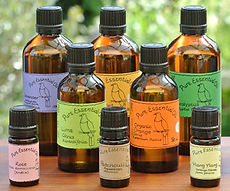 DSC_3782 Essential oils 300 px for old w