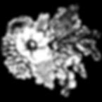 PhotoRoom-20200526-190048.png