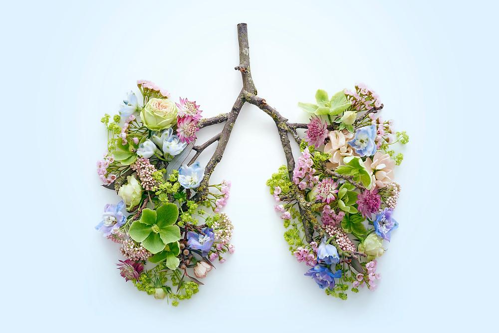 The Vagus Nerve & Breathwork