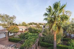 front+garden+palm.jpg