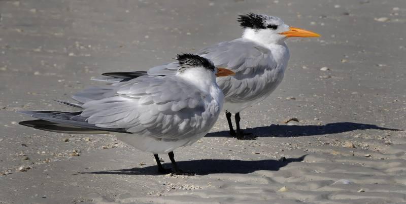 beach_birds.jpg