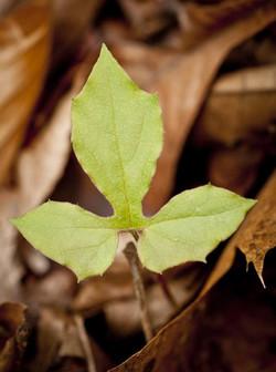 leaves_3.jpg