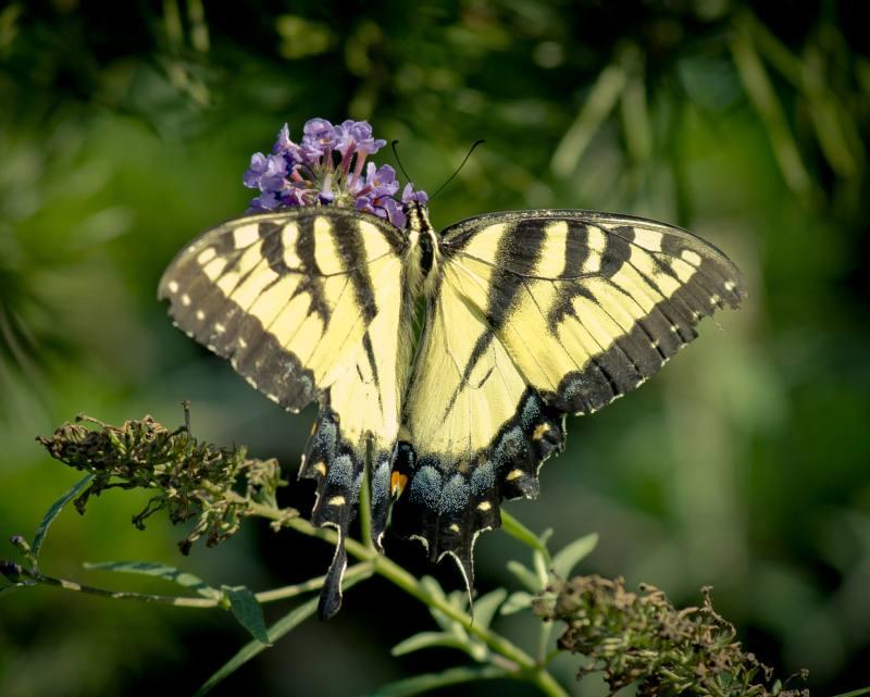 butterfly_2.jpg