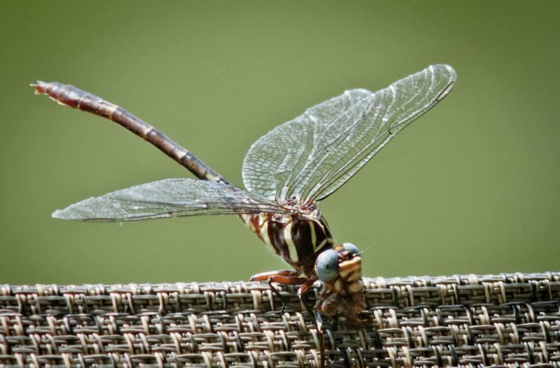 dragonfly_1.jpg