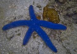 starfish_2.jpg