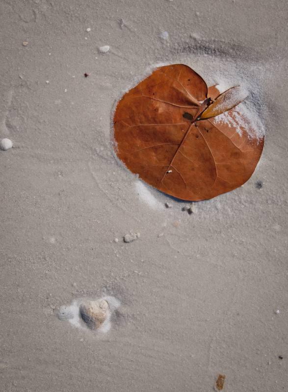 beach_leaf