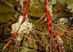 roots_2