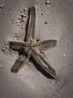 starfish_1.jpg
