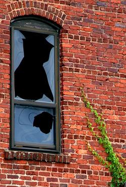broken window with vine