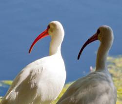 birds_3.jpg