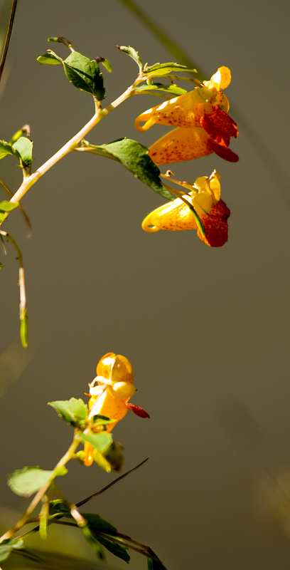 flower_7.jpg