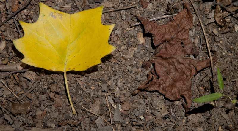 leaves_7.jpg