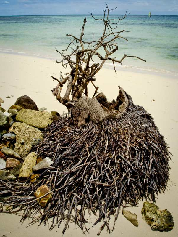 roots_1.jpg