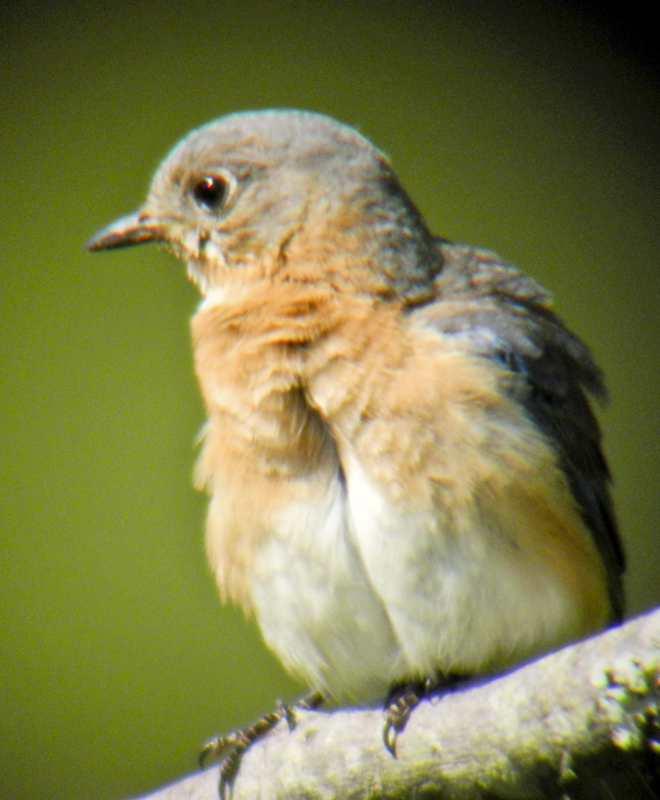 birds_5.jpg