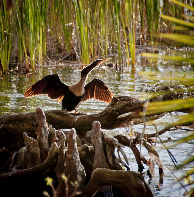 birds_4.jpg