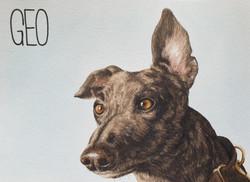 Geo the Greyhound