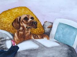 Reggie in Watercolour