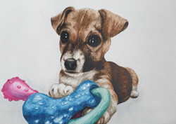 Jack Russell Commission
