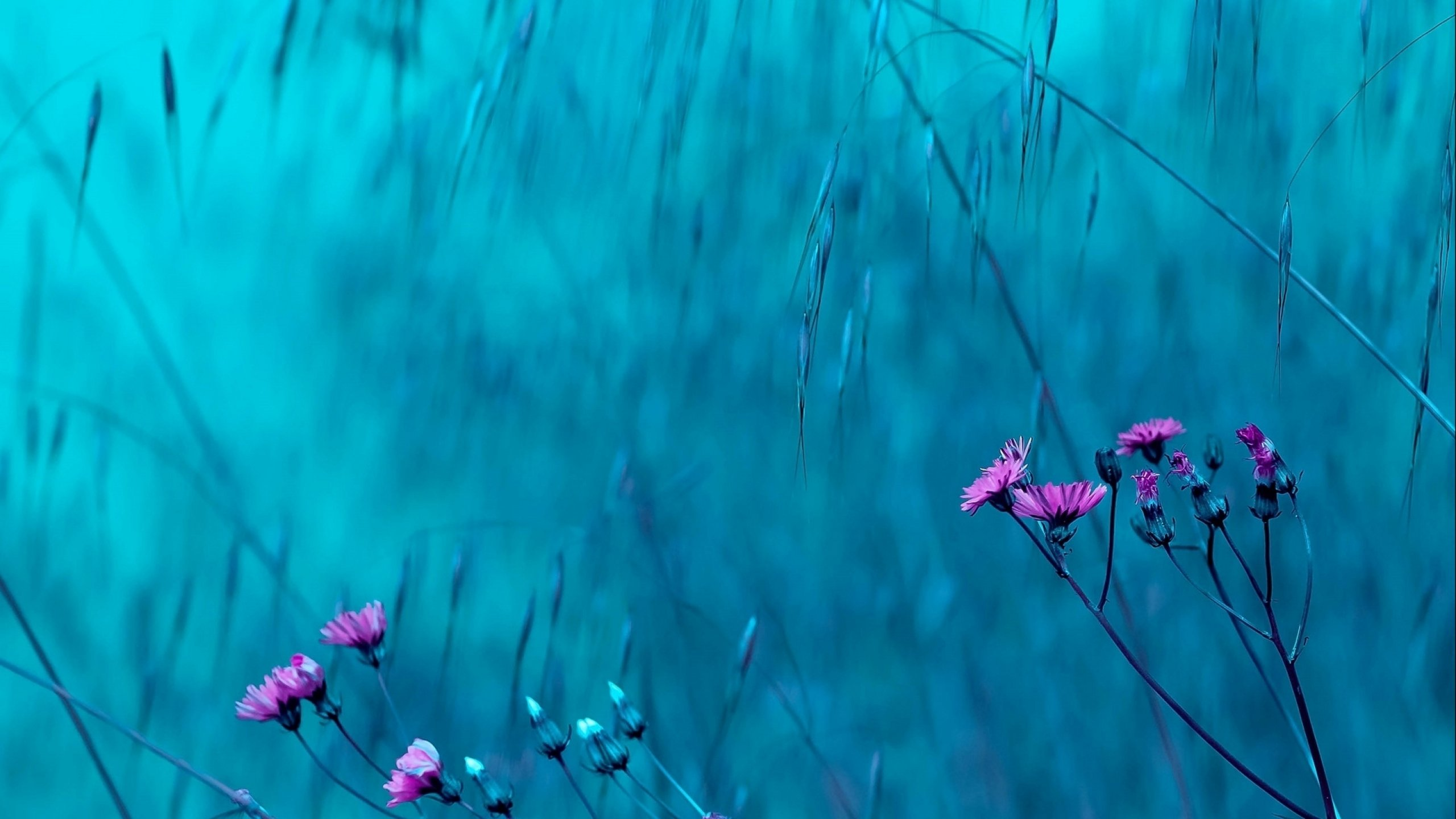 flower_flowerrs_nature_landscape_2560x1440.jpg