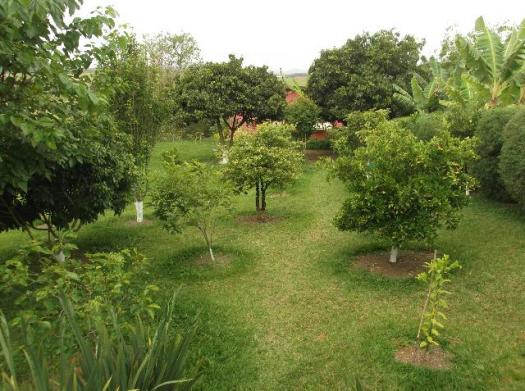 Rodeie-se de vida, natureza, pomar, jardim