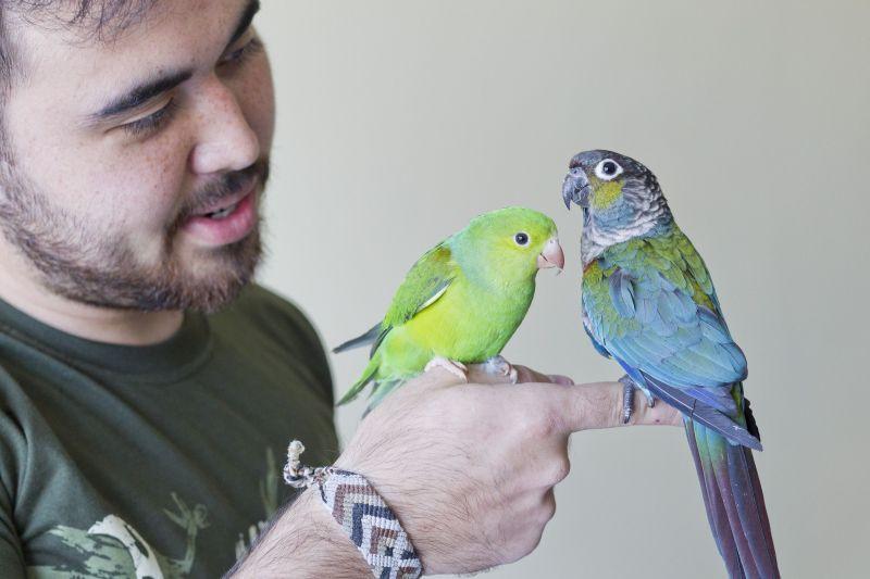 rodeie-se de vida, homem feliz, passarinho