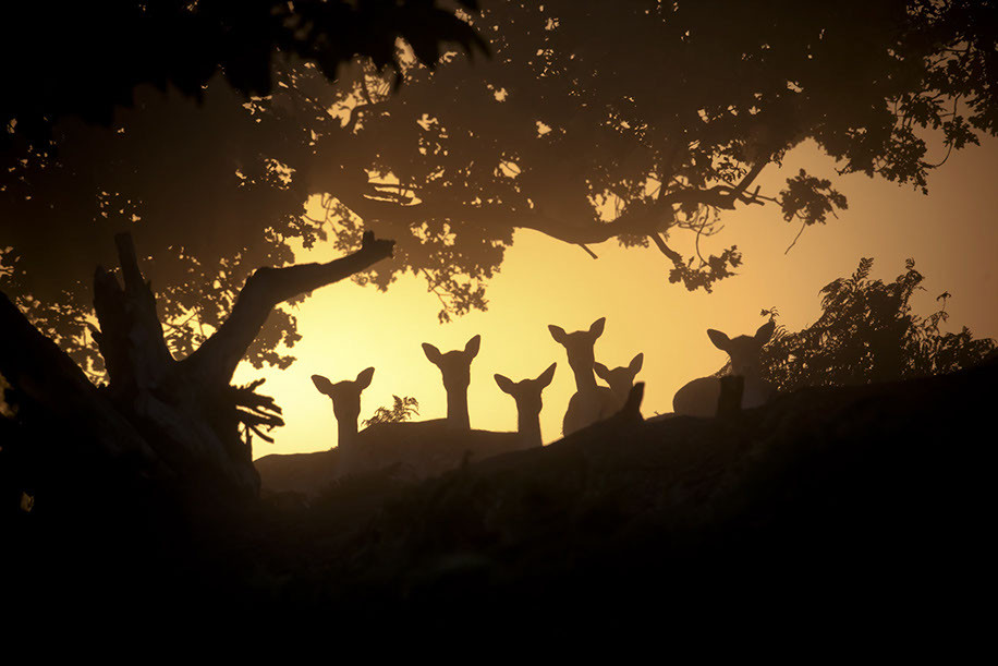 deer-at-night.jpeg