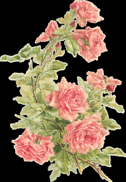 floral-clipart-transparent-background-12
