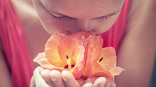 Flower Essences For Emotional Healing