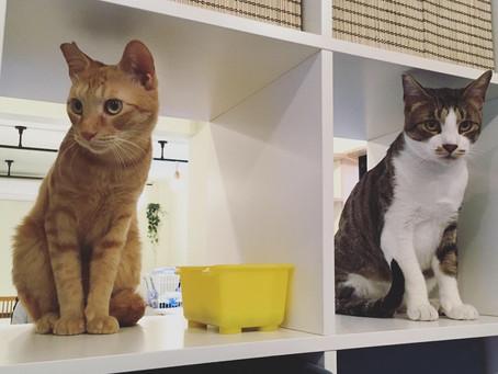 3/27(土)SANCHACO初の保護猫譲渡会開催!