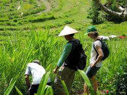 Trek the nearby rice paddies