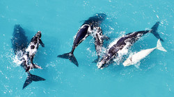 Ocean flights to view the whales