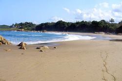 Explore the area's beaches
