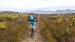 Mountain biking through the fynbos