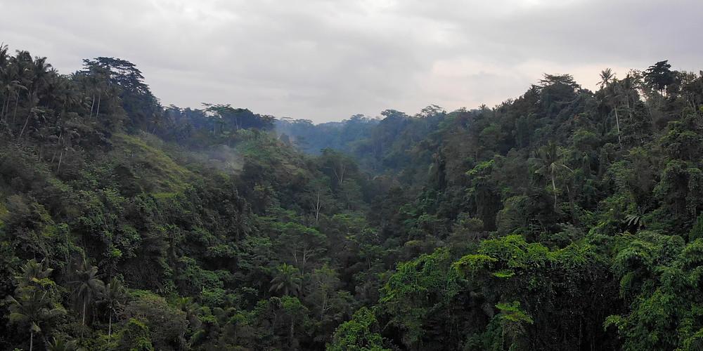 Indigineous forest in Ubud, Bali