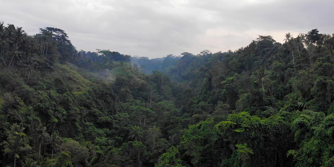 Ubud Jungle.jpg