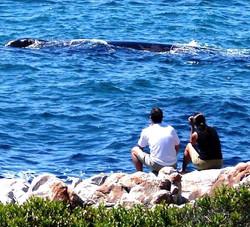 Wonderful whale watching