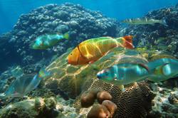 Enjoy snorkeling right off the beach
