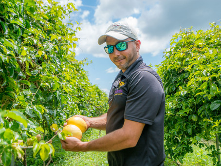 Passion Fruit Farmer Painstakingly Rebuilds His Beloved Orchard