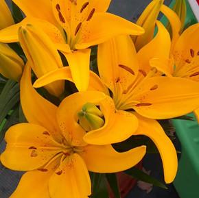 Fleurs_jaunes_2.jpg