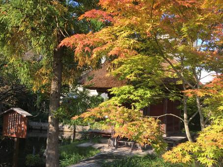 【乙エリア】紅葉が始まりました~