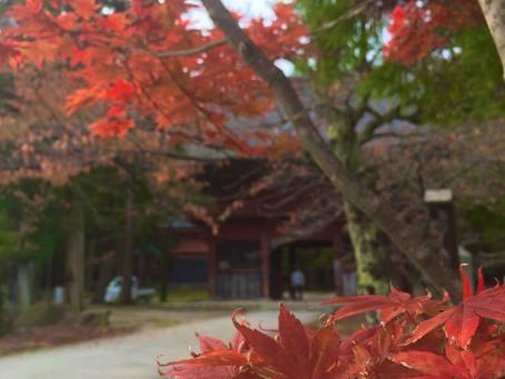 【参加者募集!11月開催企画】食欲の秋と紅葉!寺弁付きガイド散策
